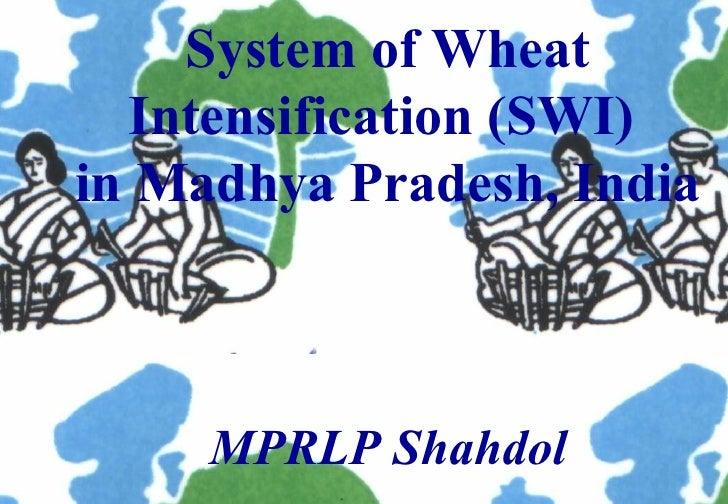 0918 System of Wheat Intensification (SWI) in Madhya Pradesh, India