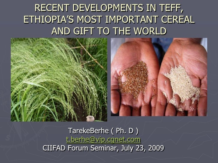 RECENT DEVELOPMENTS IN TEFF, ETHIOPIA'S MOST IMPORTANT CEREAL AND GIFT TO THE WORLD <br />TarekeBerhe ( Ph. D )<br />t.ber...