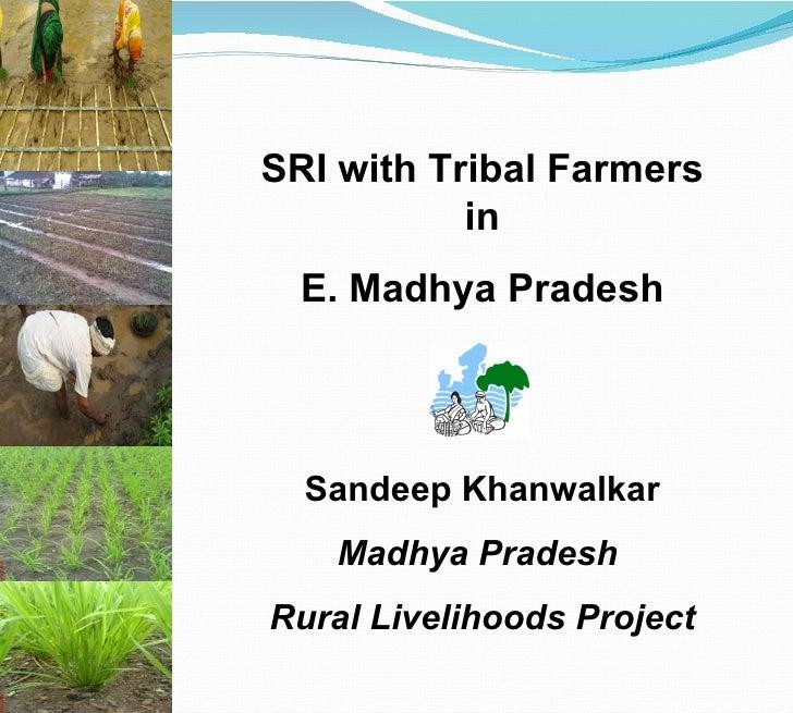 Sandeep Khanwalkar Madhya Pradesh  Rural Livelihoods Project SRI with Tribal Farmers in E. Madhya Pradesh MPRLP, Dindori