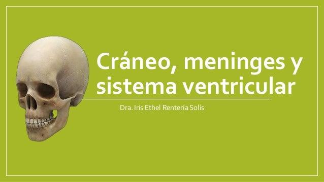 Cráneo, meninges y sistema ventricular Dra. Iris Ethel Rentería Solís