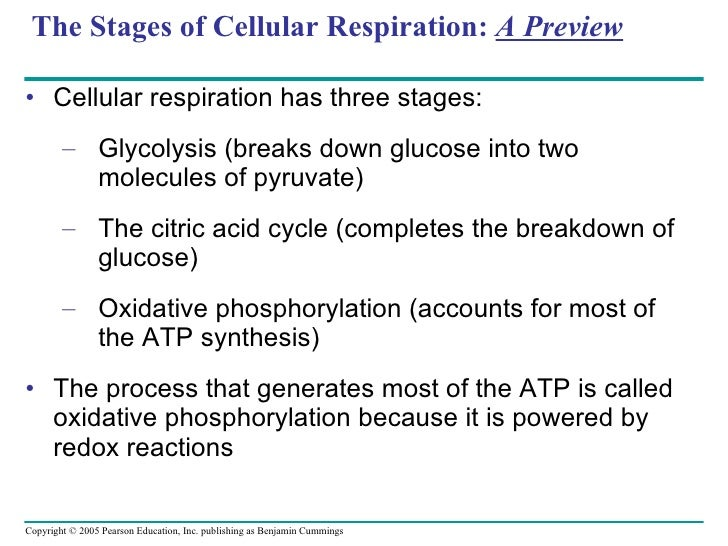 What are all the steps of cellular respiration?