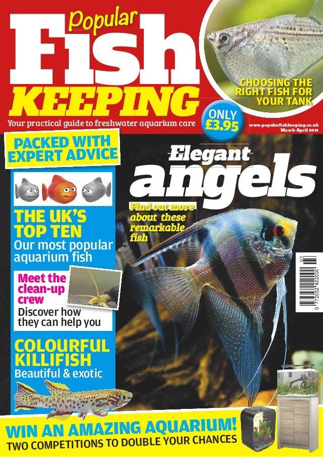 www.popularfishkeeping.co.uk March-April 2014 THE UK'S TOP TEN FishKEEPING angelsangelsangelsangelsangels Elegant Fish Popu...