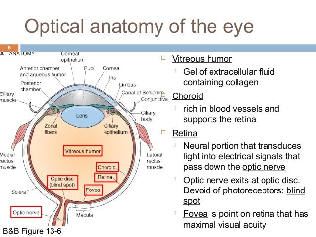 Visual System Structure And Function