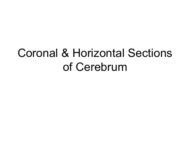 Coronal & Horizontal Sections        of Cerebrum