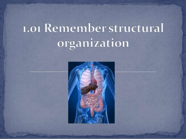 1.01 remember structural_organization