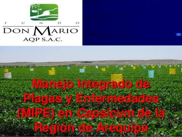Manejo Integrado de Plagas y Enfermedades (MIPE) en Capsicum de la Región de Arequipa
