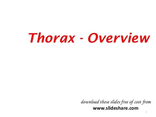Thorax - Overview 1 download these slides free of cost from www.slideshare.com