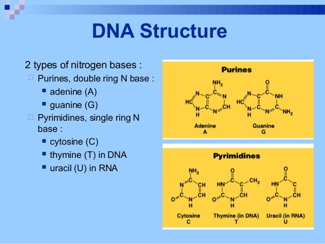 What are some types of DNA?