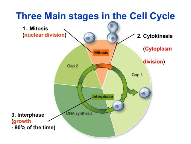 BIOLOGY FORM 4 CHAPTER 5 PART 1 - MITOSIS