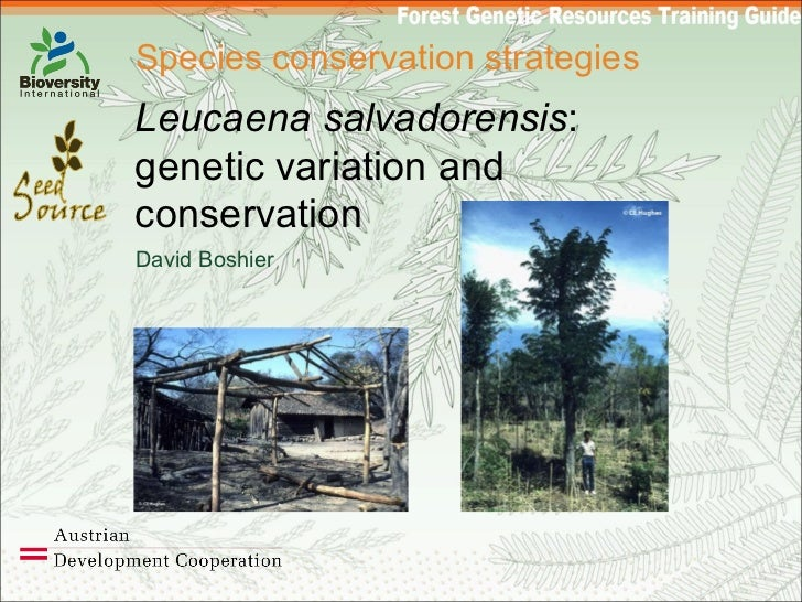 Species conservation strategies Leucaena salvadorensis : genetic variation and conservation David Boshier