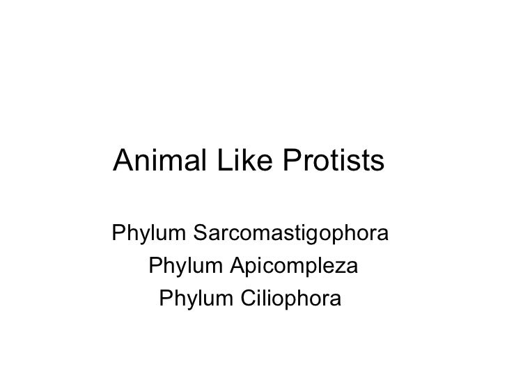 Animal Like Protists  Phylum Sarcomastigophora  Phylum Apicompleza Phylum Ciliophora