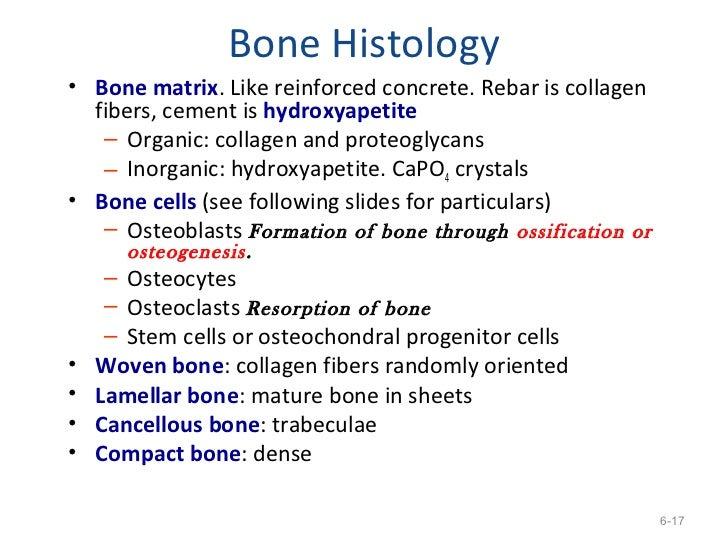 Matrix Mineralization Bone Matrix• if Mineral