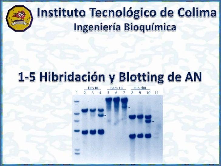 Hibridación y Blotting