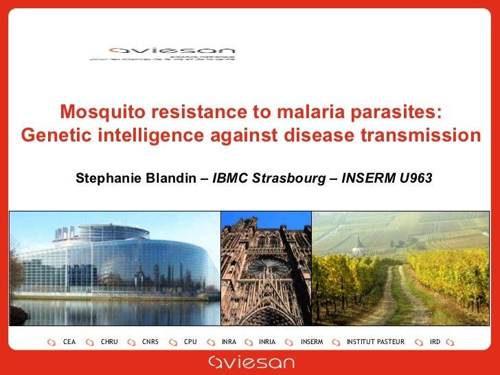 Stephanie Blandin –  IBMC Strasbourg – INSERM U963 Mosquito resistance to malaria parasites: Genetic intelligence against ...