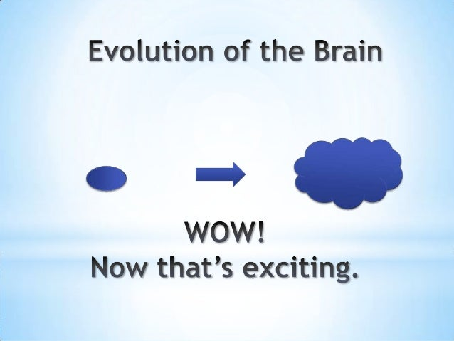 1.8 2013 clrm brain studies