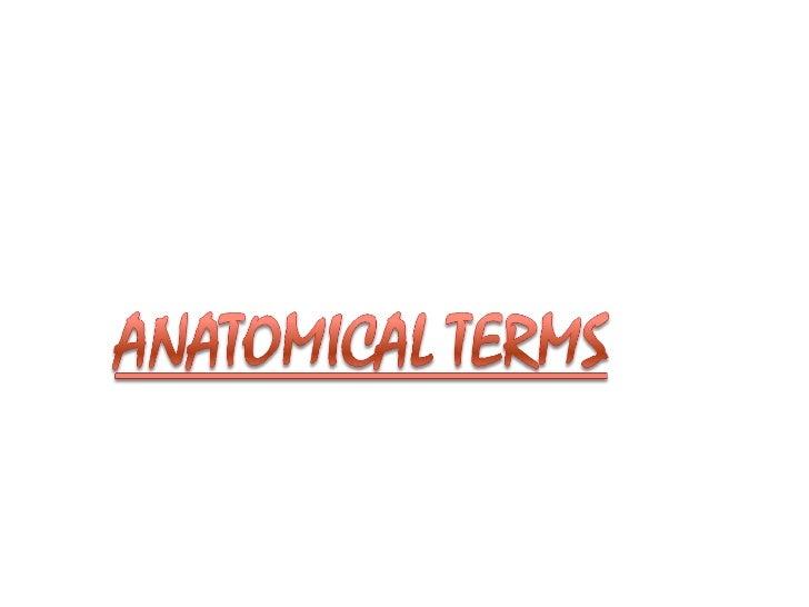 1.ANAT introduction