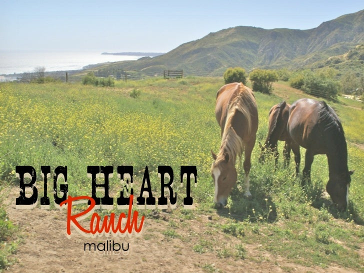 Since Jan. 2006 Big Heart Ranch has been healingdisadvantaged children and families by providing   therapeutic interaction...