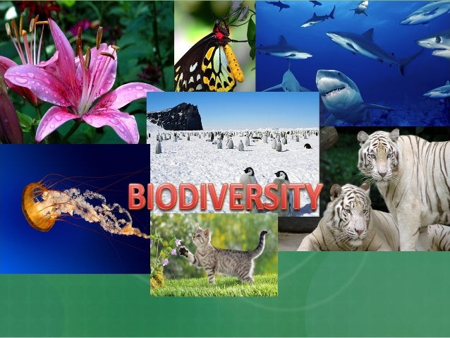 Objectives  Define biodiversity  List types of biodiversity  Propose why there is a need to protect biodiversity.