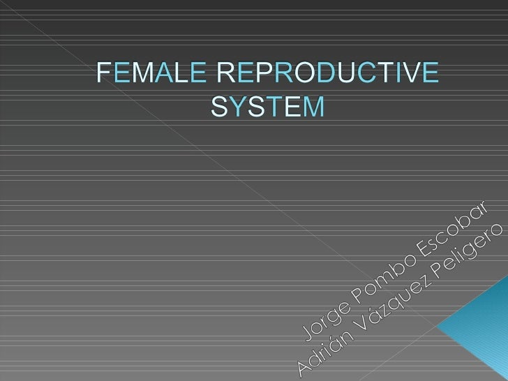 1 female reproductive system