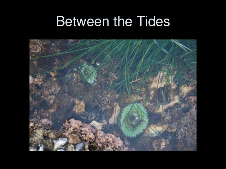 Between the Tides<br />