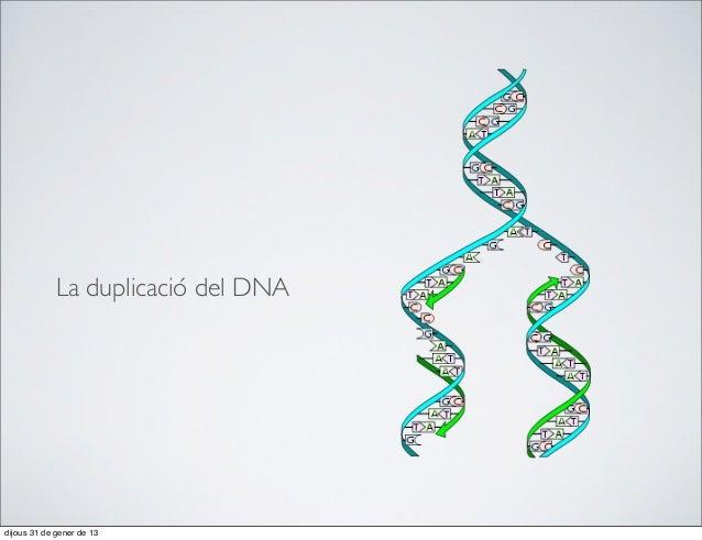 La duplicació del DNAdijous 31 de gener de 13