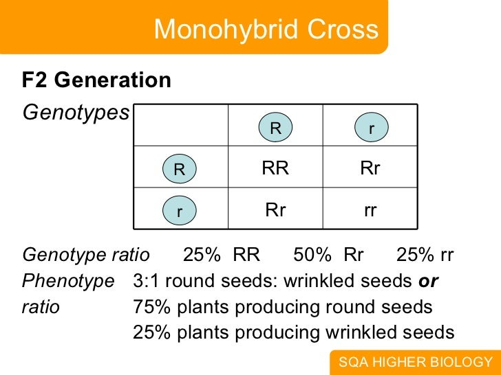 the monohybrid crossing of corn plants Corn genetics corn lab background: she also was involved in the discovery of genetic crossing over in monohybrid bagged corn with some spotted kernels.
