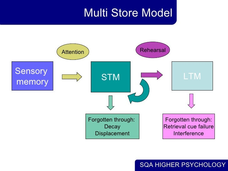 multi store model of memory Free essay: lara wainwright as psychology outline and evaluate the multi-store model of memory (12 marks) there are three parts of the multi-store model of.