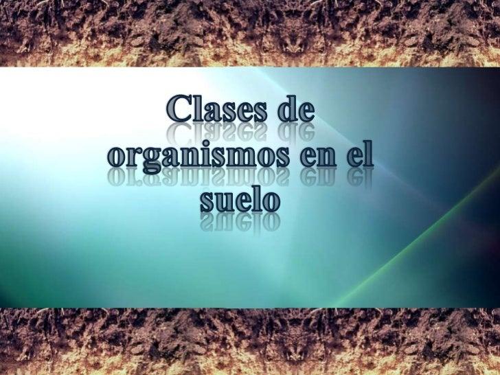 1 organismos del suelo - Clases de suelo ...