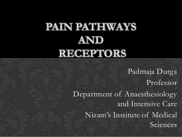 "PAIN PATHWAYS AND RECEPTORS Padmaja Durga Professor Department of Anaesthesiology and Intensive Care Nizam""s Institute of ..."