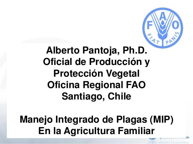 Alberto Pantoja, Ph.D. Oficial de Producción y Protección Vegetal Oficina Regional FAO Santiago, Chile Manejo Integrado de...
