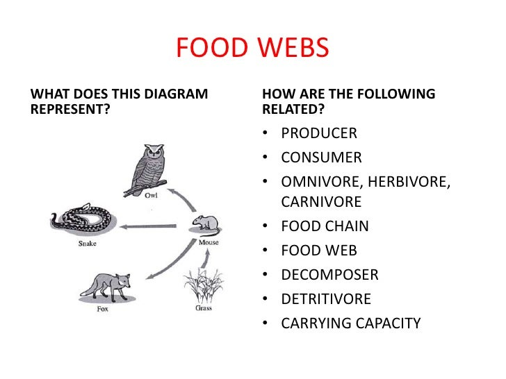 FOOD WEBSWHAT DOES THIS DIAGRAM   HOW ARE THE FOLLOWINGREPRESENT?               RELATED?                         • PRODUCE...