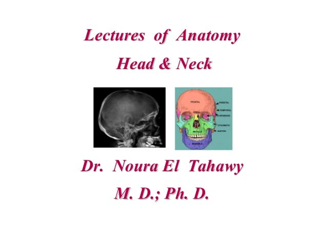 Lectures of AnatomyLectures of Anatomy Head & NeckHead & Neck Dr. Noura El TahawyDr. Noura El Tahawy M. D.; Ph. D.M. D.; P...