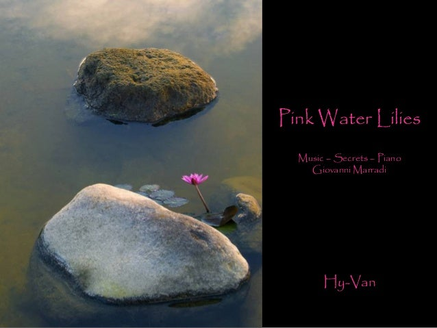 Pink Water Lilies Music – Secrets – Piano Giovanni Marradi Hy-Van
