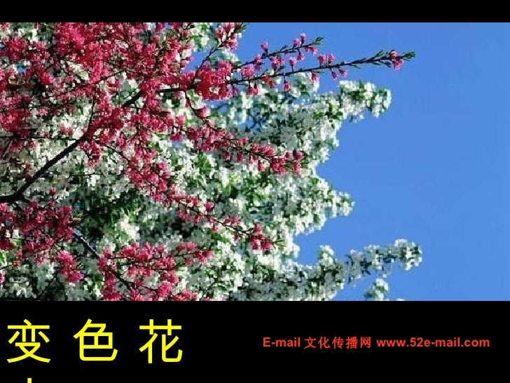 10 03 09 变色花卉