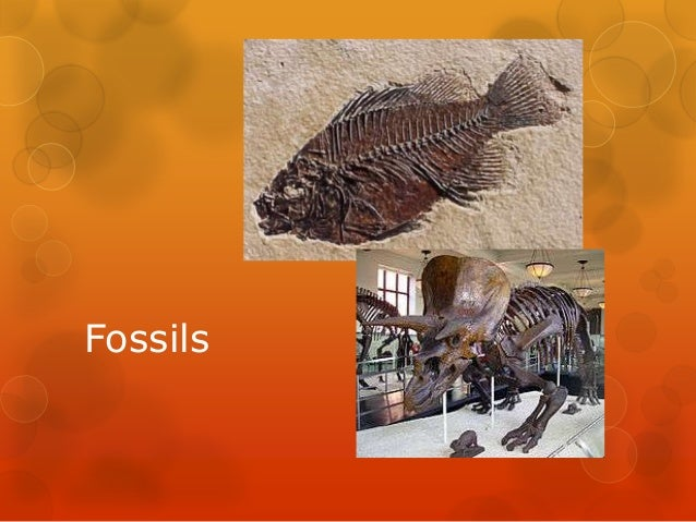 10. fossil notes
