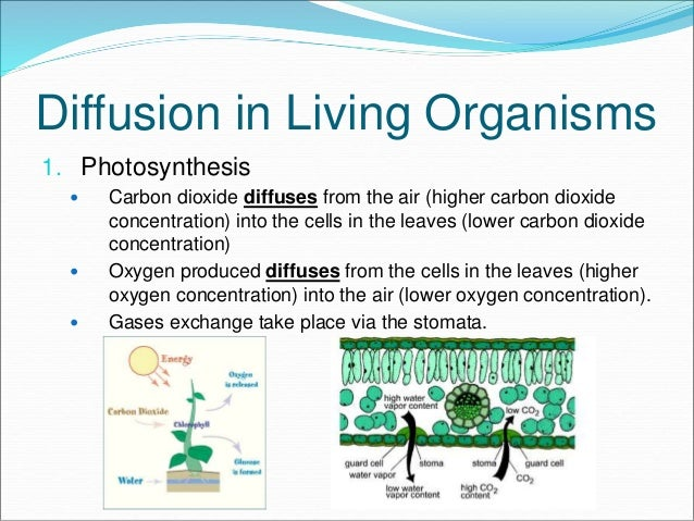 carbon dioxide and organisms How carbon dioxide may affect organisms directly and indirectly carbon dioxide is a molecule that is essential to the survival of nearly all organisms on our planet, as in some way or.