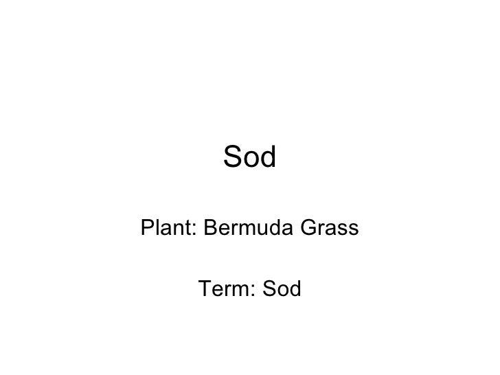 Sod Plant: Bermuda Grass Term: Sod