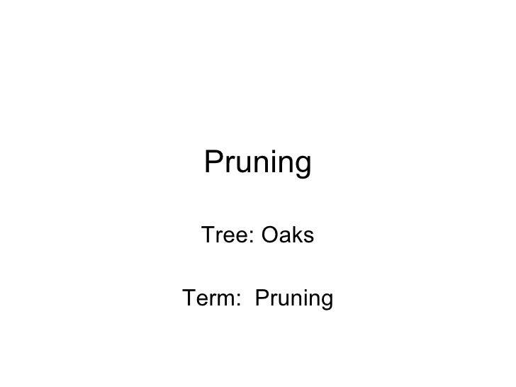 Pruning Tree: Oaks Term:  Pruning