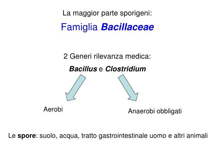 La maggior parte sporigeni:                  Famiglia Bacillaceae                     2 Generi rilevanza medica:          ...