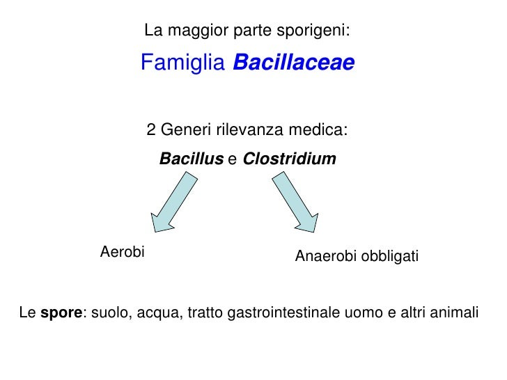 10.bacillaceae