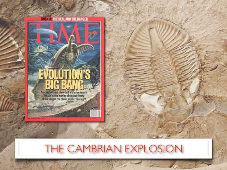 an introduction to the cambrian explosion In comparison with the cambrian explosion which appears to be more globally mediated integrative and comparative biology 43(1) introduction although.