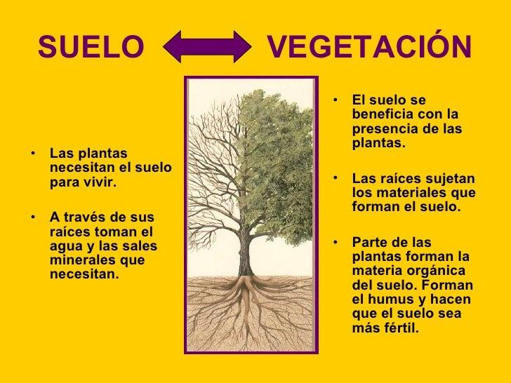 10 el suelo la vegetaci n y la fauna for Que elementos conforman el suelo