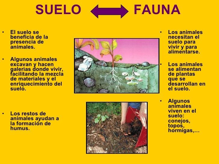 10 el suelo la vegetaci n y la fauna for Materiales para suelos
