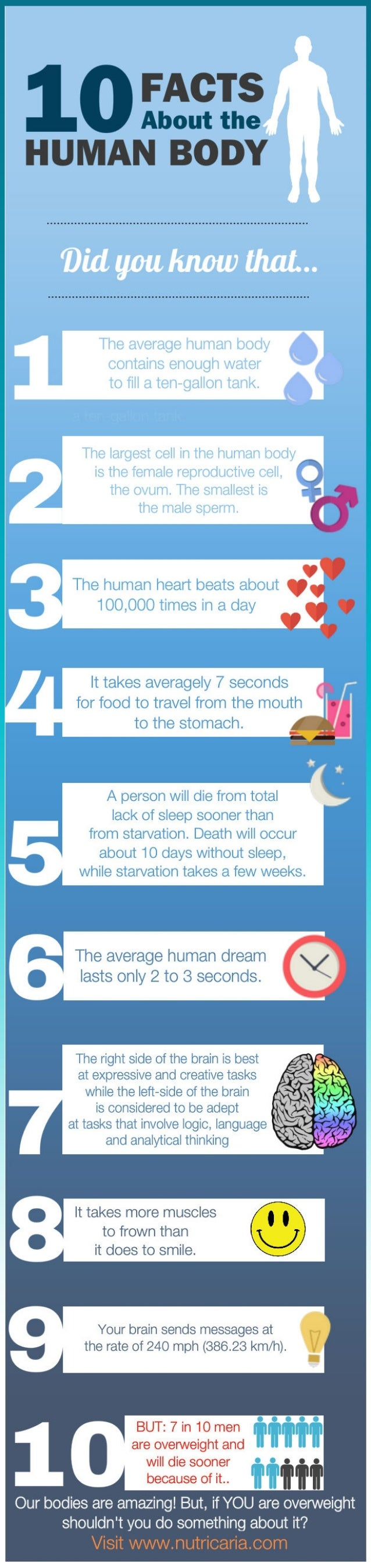 10 Facts About The Human Body
