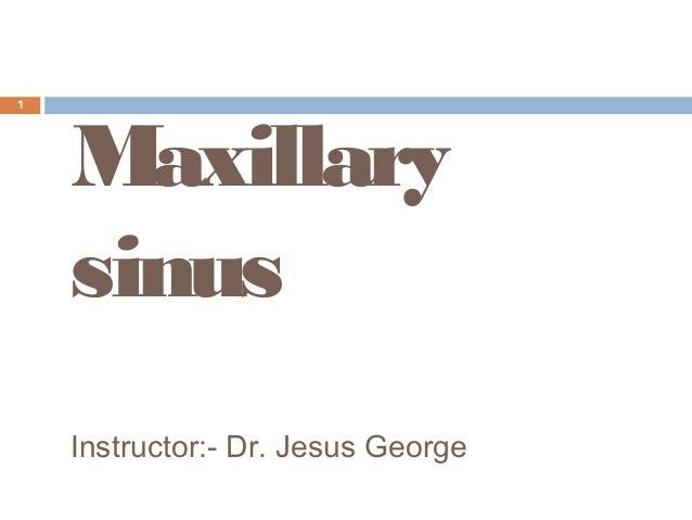 10 maxillary sinus