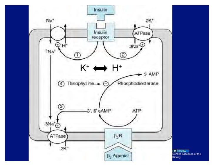 are catabolic and anabolic pathways integrated
