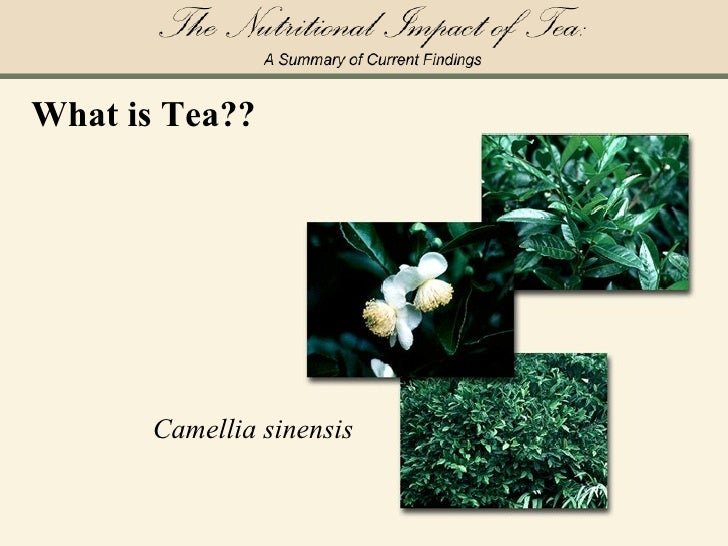 The Nutritional Impact of Tea