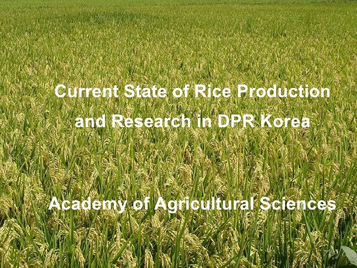 Current State of Rice Production and Research in DPR Korea Academy of Agricultural Sciences