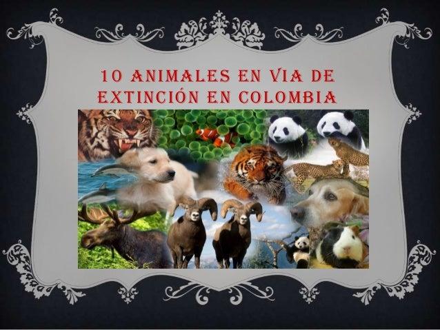 10 animales en via de extincion