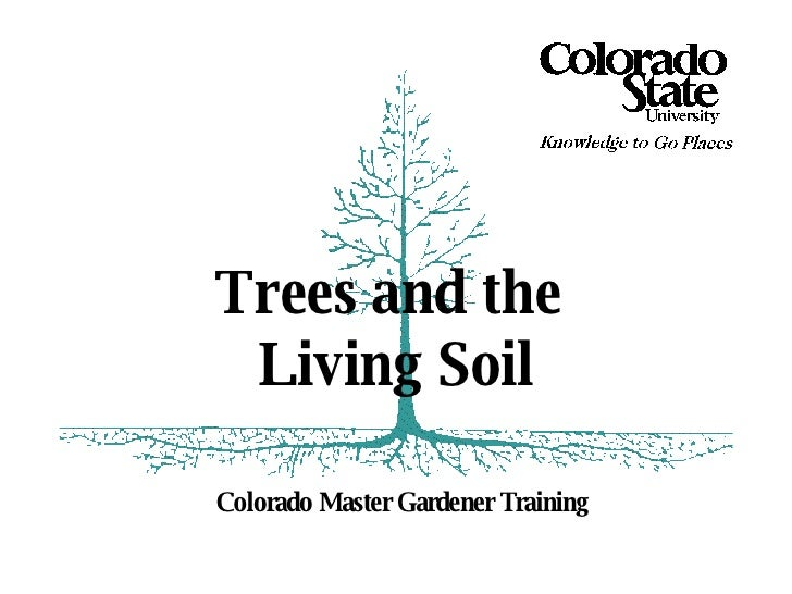 Colorado Master Gardener Training Trees and the  Living Soil